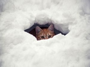 hiding place snow 2